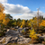 erdő · tájkép · kövek · fenyőfa · fák · francia - stock fotó © razvanphotography