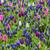 campo · flores · primavera · ver · colorido · jardim - foto stock © RazvanPhotography
