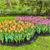 tulipas · jardim · parque · primavera · fundo - foto stock © RazvanPhotography