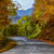 дороги · осень · деревья · листва · лес - Сток-фото © razvanphotography