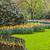 perene · prímula · primavera · jardim · flores · belo - foto stock © razvanphotography