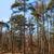 forestales · puesta · de · sol · temprano · francés · naturales · parque - foto stock © razvanphotography