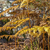 otono · escena · forestales · hermosa · caída · paisaje - foto stock © razvanphotography