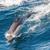 cabeça · golfinho · abrir · boca · azul - foto stock © razvanphotos