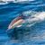 イルカ · ジャンプ · 外 · 海 · 背景 · 夏 - ストックフォト © razvanphotos