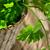 kulinarny · oddziału · pietruszka · beżowy · nóż - zdjęcia stock © razvanphotos