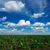 verde · prado · nublado · céu · sol · luz - foto stock © razvanphotos