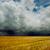 tormenta · trigo · dramático · imagen · rayo · campo - foto stock © razvanphotos