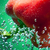 vermelho · pimenta · bubbles · comida · fruto · verde - foto stock © razvanphotos