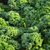 kale plant stock photo © rbiedermann