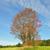 branche · montagnes · Pologne · nature · vert · rouge - photo stock © rbiedermann