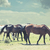 four horses grazing on the prairie stock photo © rcarner