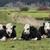 vee · eenzaamheid · boom · gras - stockfoto © rghenry