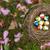 vogels · nest · ei · geïsoleerd · witte · gras - stockfoto © rghenry