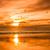beach bird sunset stock photo © rghenry