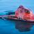 hal · fej · makréla · fókusz · víz · óceán - stock fotó © rghenry
