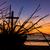árvore · raízes · praia · erosão - foto stock © rghenry