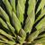 agave · завода · подробность · листьев · свет · назад - Сток-фото © rghenry