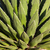 agave · impianto · dettaglio · foglie · luce · indietro - foto d'archivio © rghenry