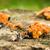 gombák · öreg · erdő · növény · esernyő · gyógynövények - stock fotó © rghenry