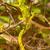 gekko · klimmen · geïsoleerd · witte · achtergrond - stockfoto © rghenry