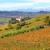 hills · outono · Itália · de · manhã · cedo · ver · colorido - foto stock © rglinsky77