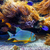 vízalatti · korall · fenék · Vörös-tenger · Egyiptom · víz - stock fotó © rglinsky77
