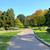 路地 · 公園 · イタリア · 狭い · 緑 - ストックフォト © rglinsky77