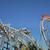 montaña · rusa · diversión · grito · velocidad · parque · rueda - foto stock © rglinsky77