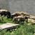 tehenek · birka · testtartás · tájkép · tehén · mező - stock fotó © rhamm