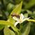 Bee Pollinating Lemon Tree stock photo © rhamm
