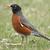 avrupa · oturma · ağaç · kuş · kırmızı · kahverengi - stok fotoğraf © rhamm