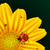 joaninhas · conjunto · colorido · isolado · branco · natureza - foto stock © robertosch