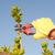 садовник · саду · декоративный · листва · внешний · крыльцо - Сток-фото © roboriginal