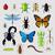 hamamböceği · ikon · vektör · stil · simge · mavi - stok fotoğraf © robuart