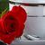 gül · kahve · fincanı · kırmızı · gül · yaprak · kırmızı · aşıklar - stok fotoğraf © rogerashford