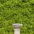 roślinność · mur · starych · miasta · niebo · tekstury - zdjęcia stock © rognar