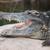 крокодила · весело · счастливым · дизайна · искусства · рот - Сток-фото © rognar