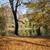 озеро · парка · Варшава · Польша · квартиру · зданий - Сток-фото © rognar