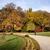 grama · outono · floresta · abstrato · natureza · fundo - foto stock © rognar
