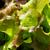 sebze · yatak · taze · pancar · çim · gıda - stok fotoğraf © roka