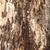 suprafata · fisuri · multe · copac · roşu - imagine de stoc © romas_ph