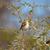 アフリカ · 黄色 · 鳥 · セントラル · ゲーム - ストックフォト © romitasromala