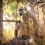 бабуин · верховая · езда · матери · тело · назад - Сток-фото © romitasromala