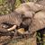 drinking elephant stock photo © romitasromala