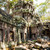храма · руин · стиль · дерево · природы · искусства - Сток-фото © romitasromala
