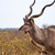 portret · woestijn · Botswana · reizen · vlees · park - stockfoto © romitasromala