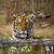 虎 · 草 · 寺 · 北 · タイ · ツリー - ストックフォト © romitasromala