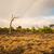 landschap · Botswana · regenboog · dramatisch · zuidelijk · afrika - stockfoto © romitasromala