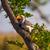 ボツワナ · ツリー · リザーブ · アフリカ · 家族 - ストックフォト © romitasromala